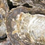 cropped-oysters.jpg