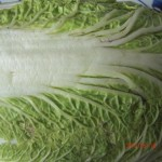 Cooking with Napa Cabbage